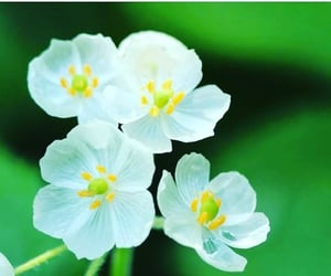 skeleton flower and s image