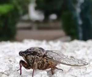 animals, bug, and cute image