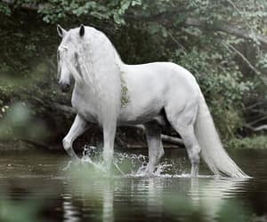unicorn and i love this so much image