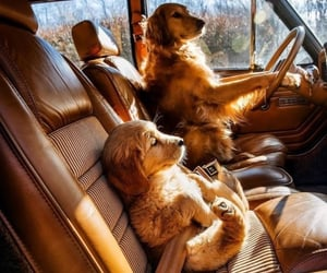 dogs, old car, and puppy image