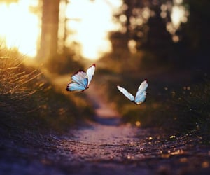 butterfly, forest, and nature image