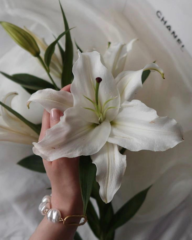 aesthetics, flowers, and lily image