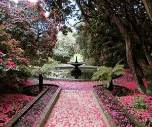 Quelle: wanderinginjuly.tumblr.com / #flower petals #holker gardens #fountain