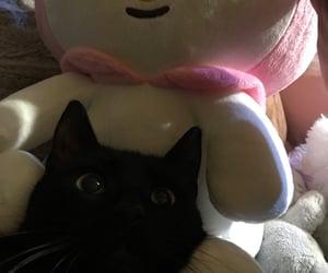 asian, black, and black cat image