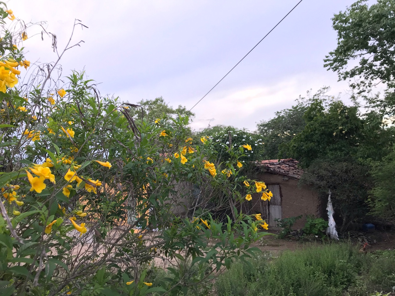 autoral, flowers, and nature image