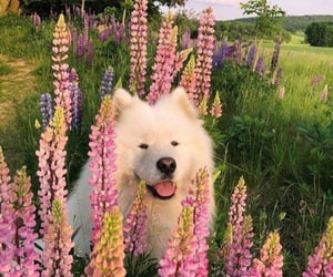 aesthetic, alternative, and dogs image