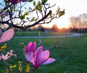 blossom, flower, and flowers image