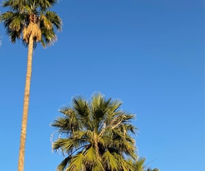 aesthetic, palm tree, and sky image