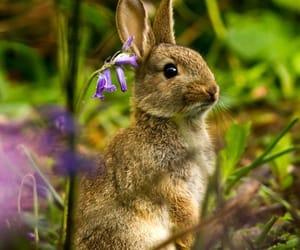 Rabbit among the Bluebells