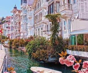 istanbul, turkey, and flowers image