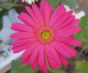 cactus, dishes, and gerbera image