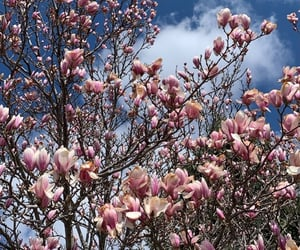 ciel, clouds, and magnolia image