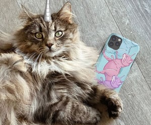 cat lover, iphone case, and phone case image