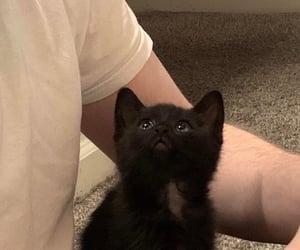 animal, cat, and alternative image
