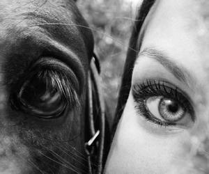 eyes, horse, and human image