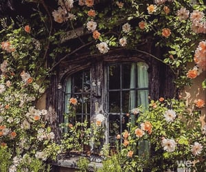 flowers, aesthetic, and cottagecore image
