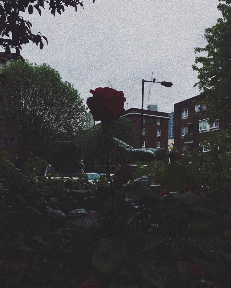article, goth, and red rose image
