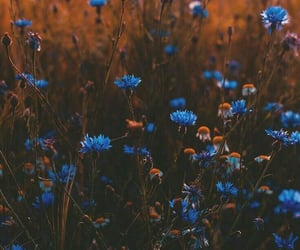 flowers, blue, and beautiful image