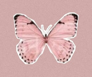 pink wallpaper, butterfly, and noise image