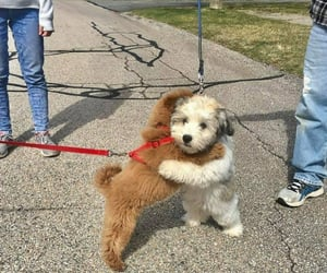 dogs, animals, and hugging image