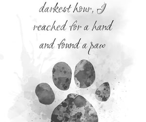 in my darkest hour, i reached for a hand, and i found a paw image