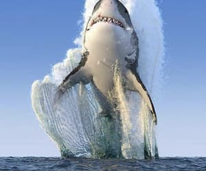 great white, majestic, and travel image