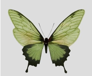article, butterflies, and grunge image