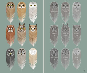 owl paper feather image