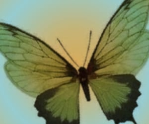 butterfly, header, and archive image