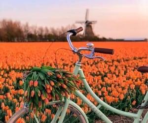 tulips, bike, and flowers image