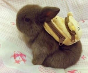 animals, backpack, and bunny image