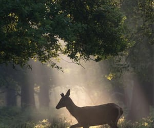 deer, nature, and aesthetic image