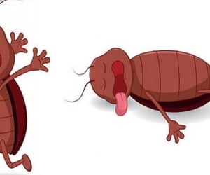 bed bug heat treatment, bed bug exterminator, and bed bug treatment cost image