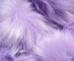 lavender, purple, and lilac image