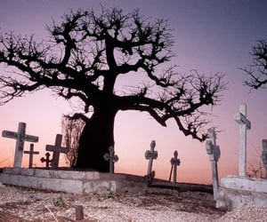 cemetery, graveyard, and tree image