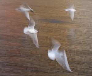 animals, beach, and birds image