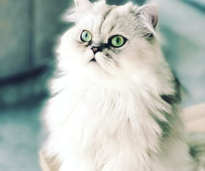 aesthetic, beautiful, and cats image