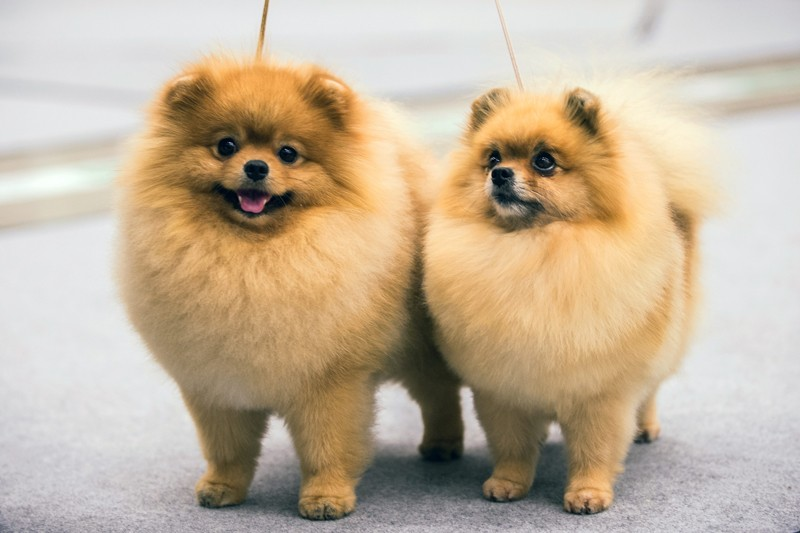article, cuteanimal, and cutedog image