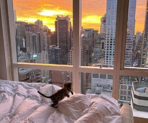 aesthetic, apartment, and cat image