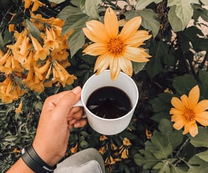 autoral, yellow, and coffe image