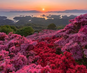 japan, nature, and view image