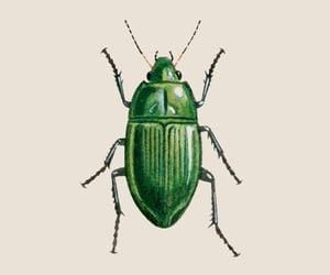 beetle, bug, and drawing image