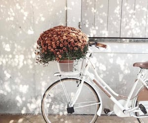 bicycle, flowers, and bike image