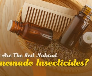 homemade insect killer image