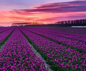 colorful, field, and flowers image