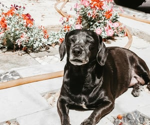 dachshund, pagan, and photography image