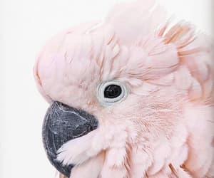 animals, beautiful, and birds image