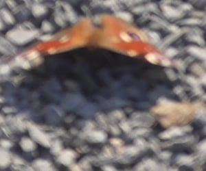 blurry, stones, and butterfly image