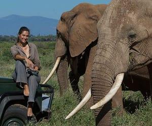animal, veterinarian, and travel image