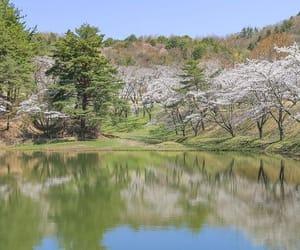 akita, japan, and spring image